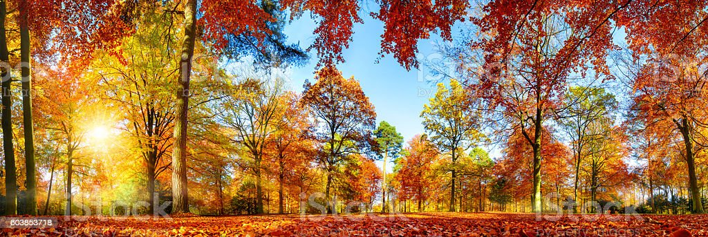 Colorful forest panorama in autumn stock photo