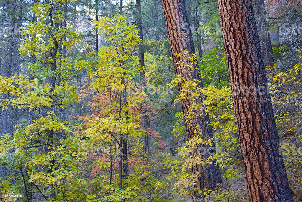 Colorful forest stock photo