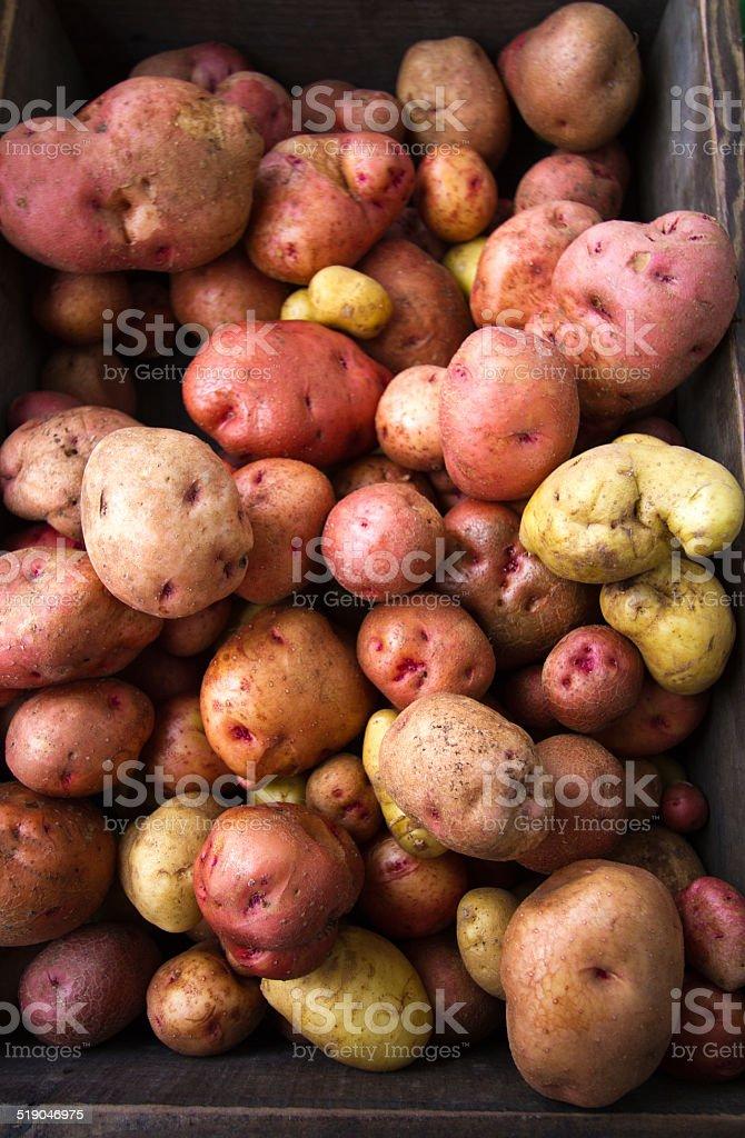 Colorful Fresh (Raw) Potatoes at Market, Brown Wood Box stock photo