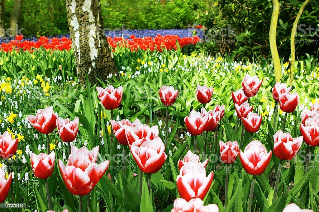 colorful garden royalty-free stock photo