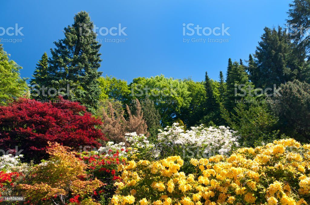 Colorful Garden royalty-free stock photo