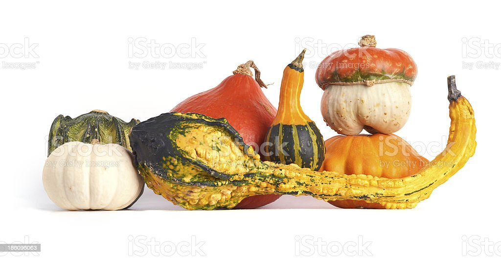 Colorful gourd family. royalty-free stock photo