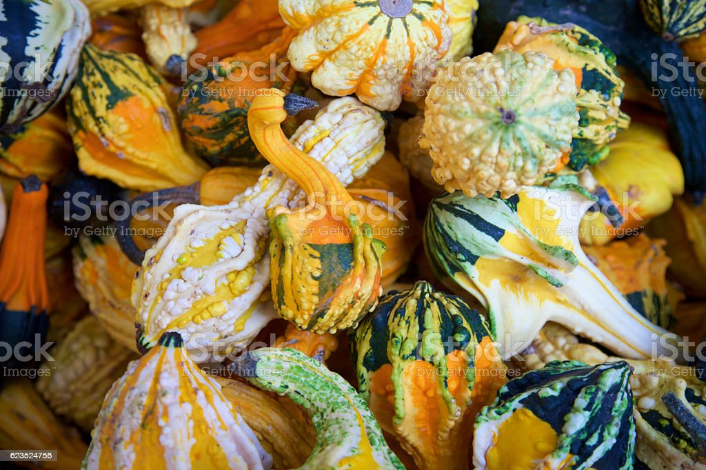 colorful gourds stock photo
