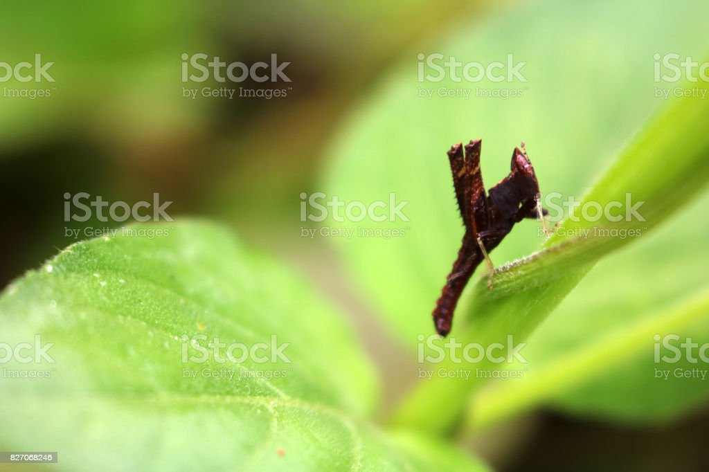 Colorful Grasshopper perched on a leaf stock photo