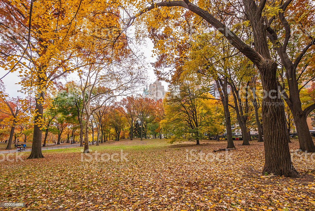 Colorful grassy knoll on a autumn day, Central Park, NY stock photo