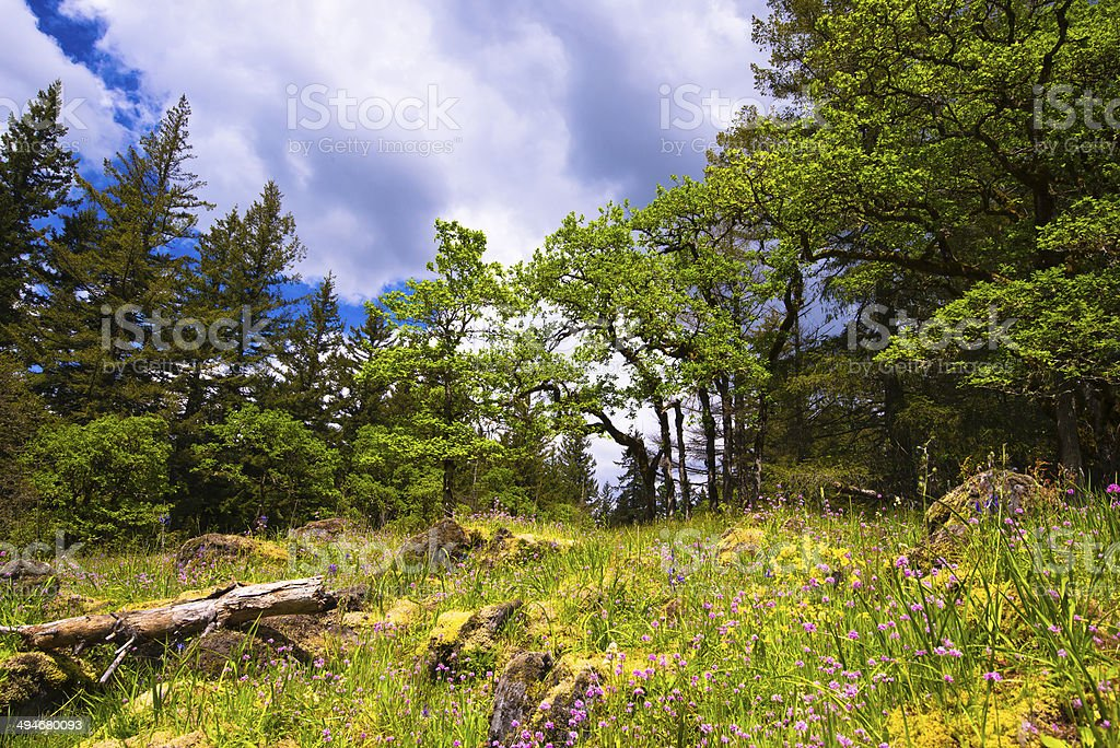 Colorful green glade surrounded by trees stock photo
