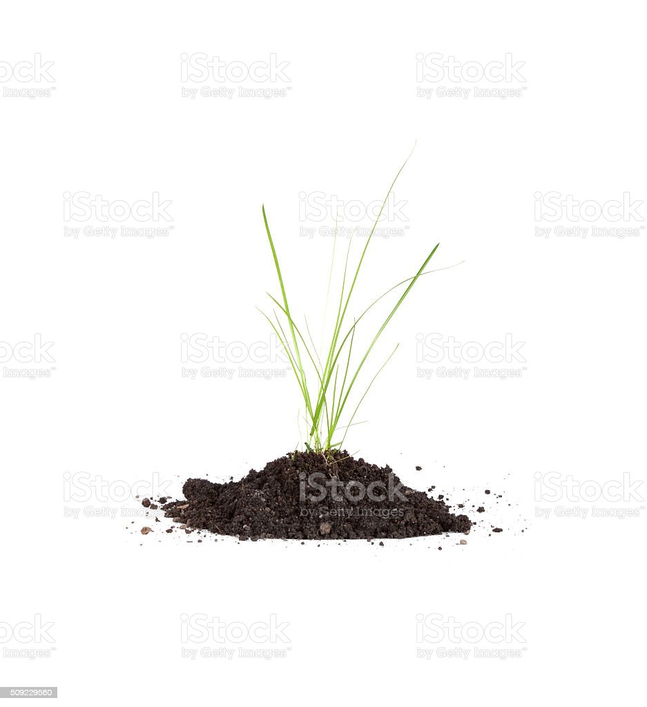 colorful green grass in soil stock photo