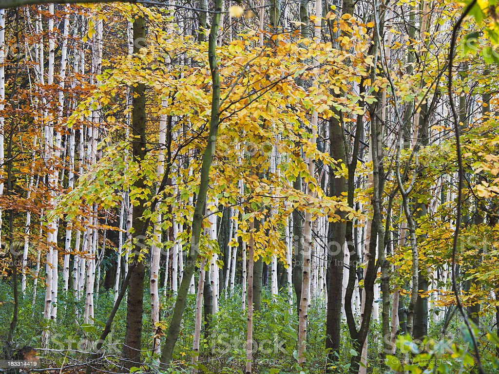 colorful grove in autumn stock photo
