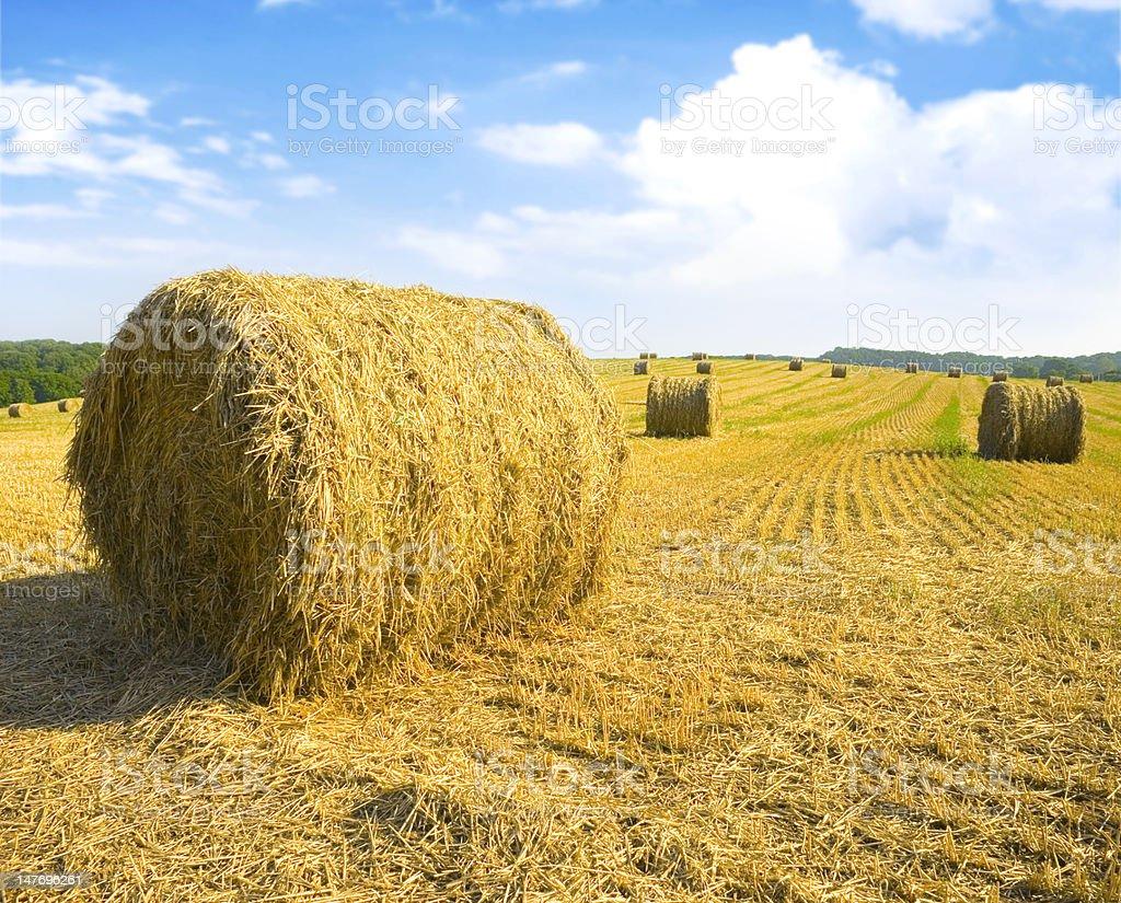 Colorful Hay Bales royalty-free stock photo