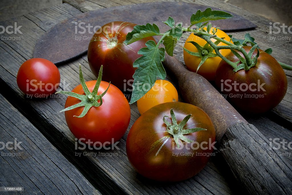 Colorful heirloom tomatoes with old garden tool. stock photo