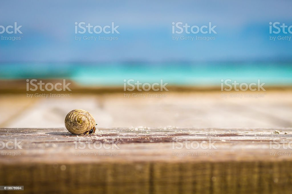 Colorful hermit crab stock photo