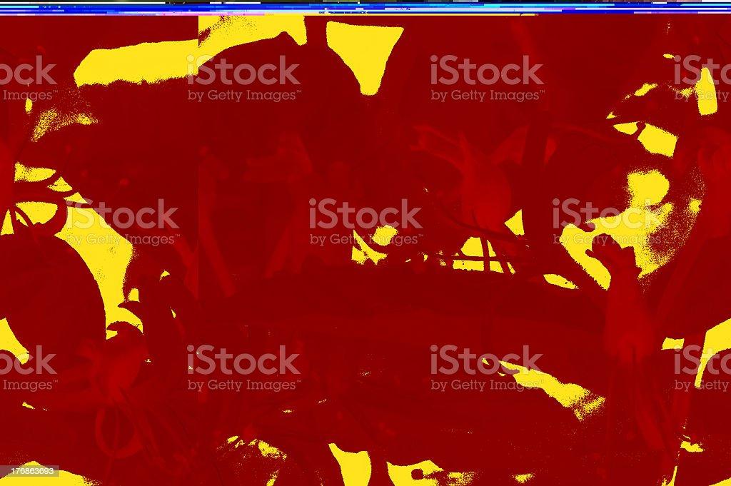 Colorful Honeysuckle stock photo