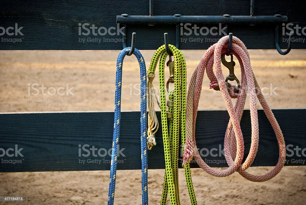 Colorful Horse Leads stock photo