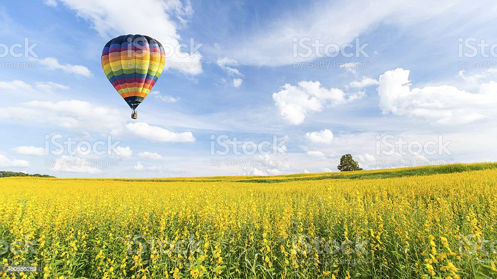 Colorful hot air balloon flying over yellow flowers and sky stock photo