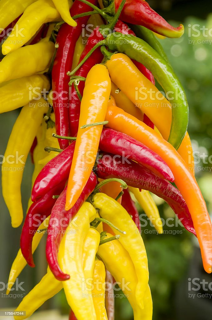 Colorful hot chili peppers at a market stall stock photo