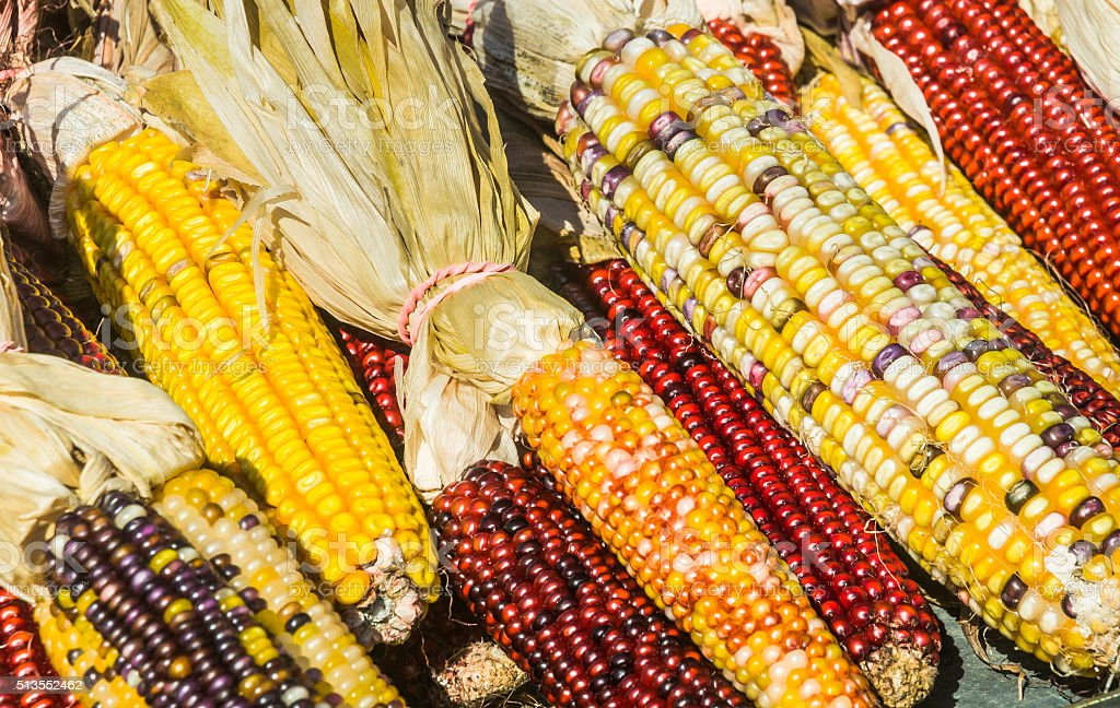 Colorful Indian Corn stock photo