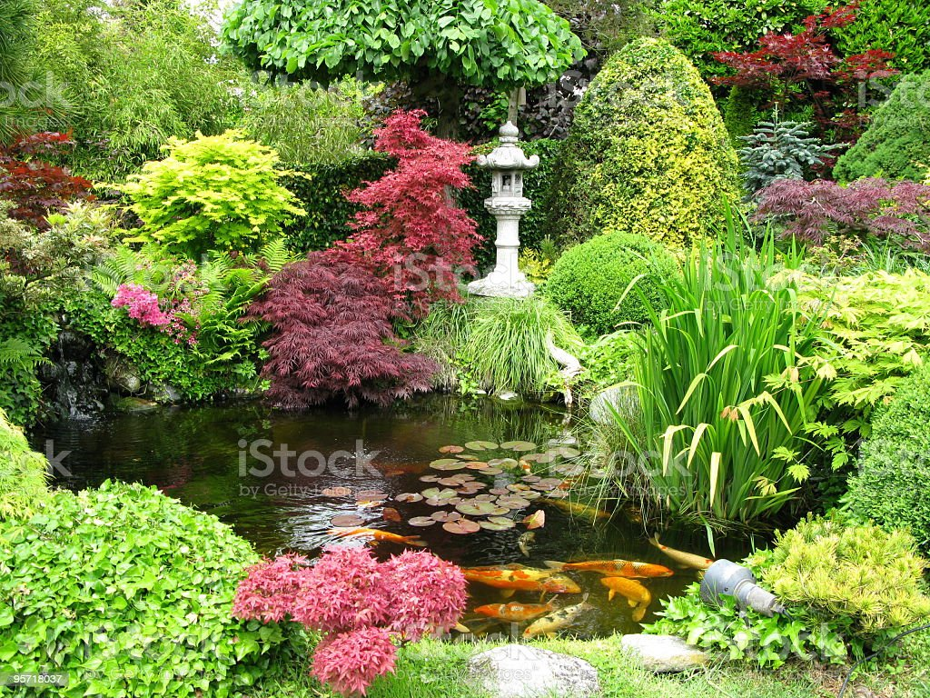 Colorful Japanese garden with koi fish pond stock photo