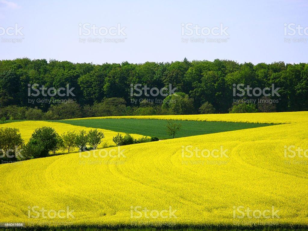 Colorful landscape in the Kraichgau stock photo