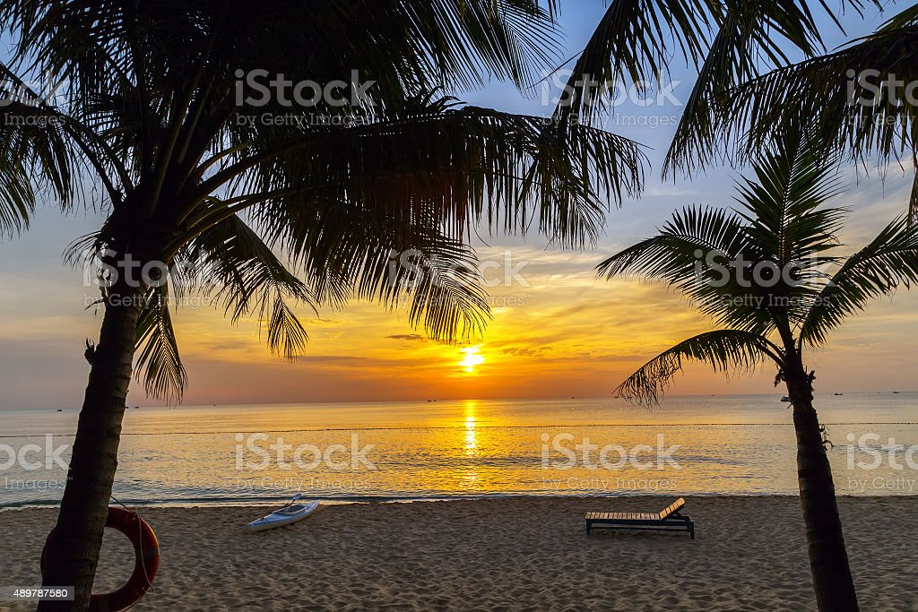 Colorful landscape scenery palm silhouette stock photo