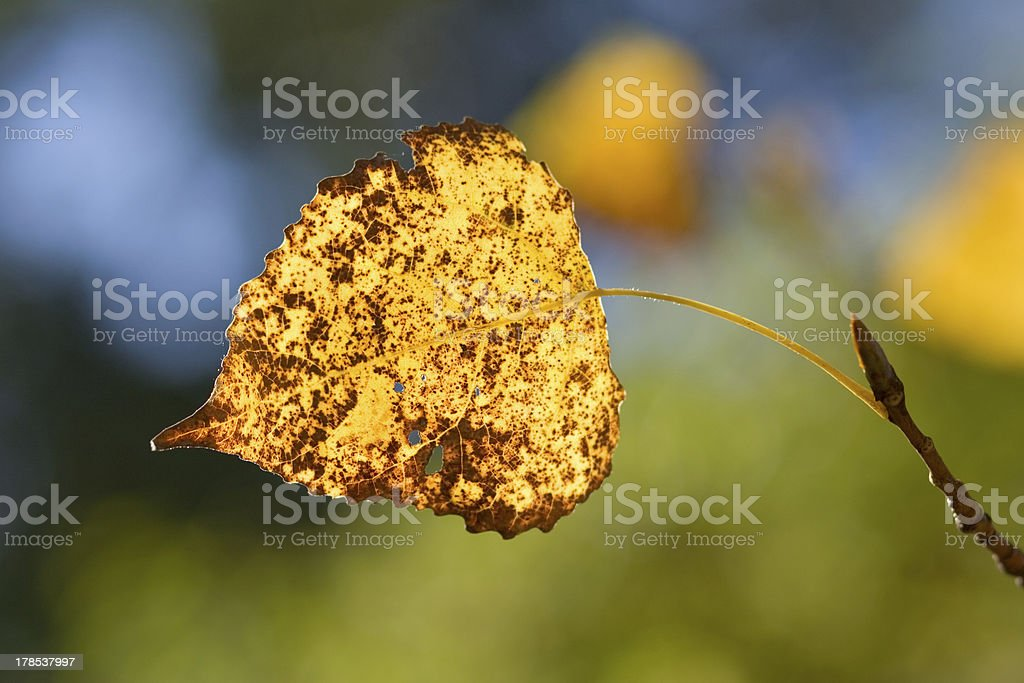 Colorful leaf on a branch stock photo
