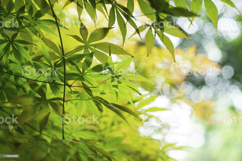 colorful leaves close up royalty-free stock photo