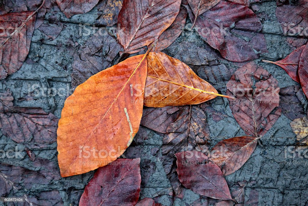 colorful leaves in autumn stock photo