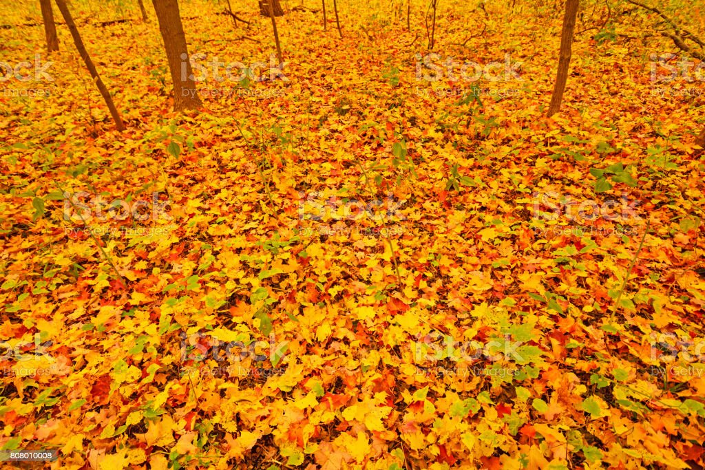 Colorful Leaves on a Forest Floor stock photo