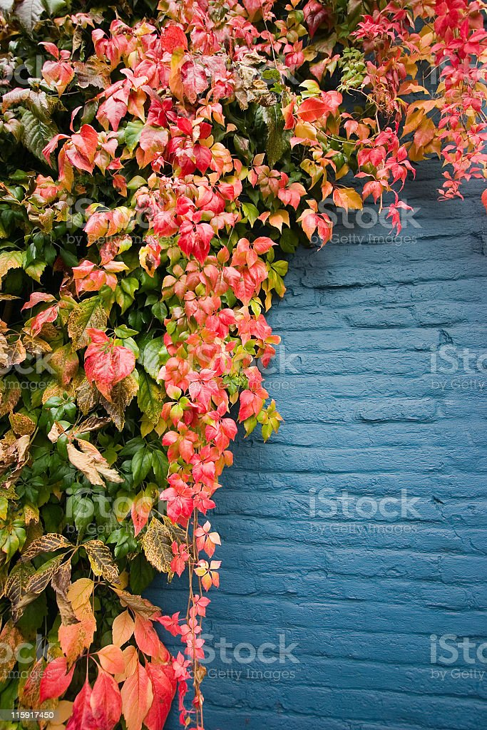 Colorful leaves on blue wall royalty-free stock photo