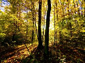 Colorful leaves on deciduous trees in deciduous forest during autum