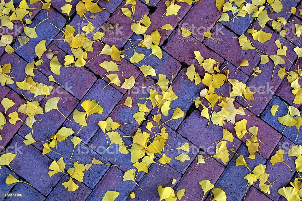 Colorful Leaves v2 royalty-free stock photo