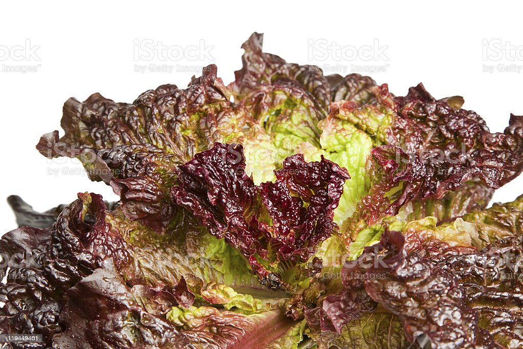 Colorful lettuce leaves stock photo