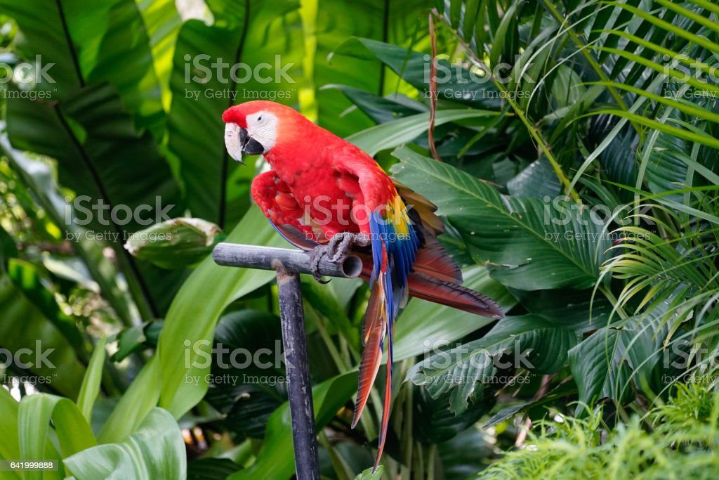 Colorful Macaw parrot perched on post stock photo