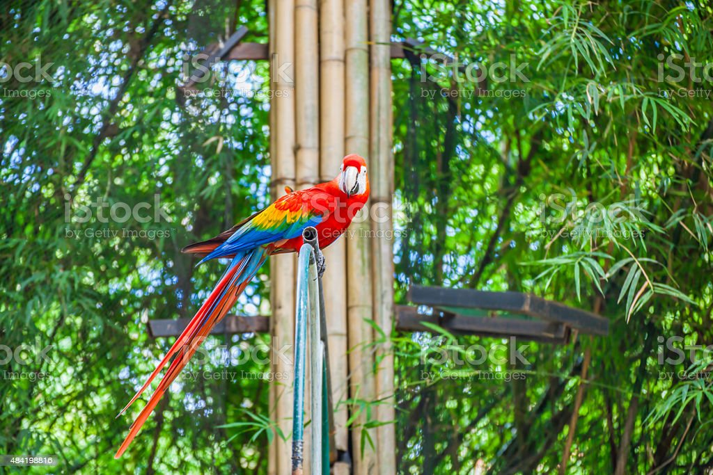 Colorful macaw stock photo