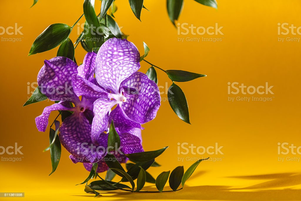 Colorful macro image of an orchid, the tropical flower. stock photo