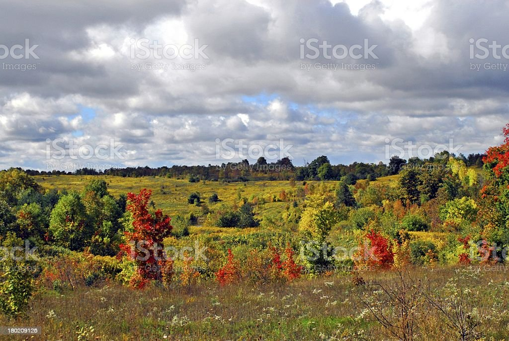 Colorful meadow in fall royalty-free stock photo