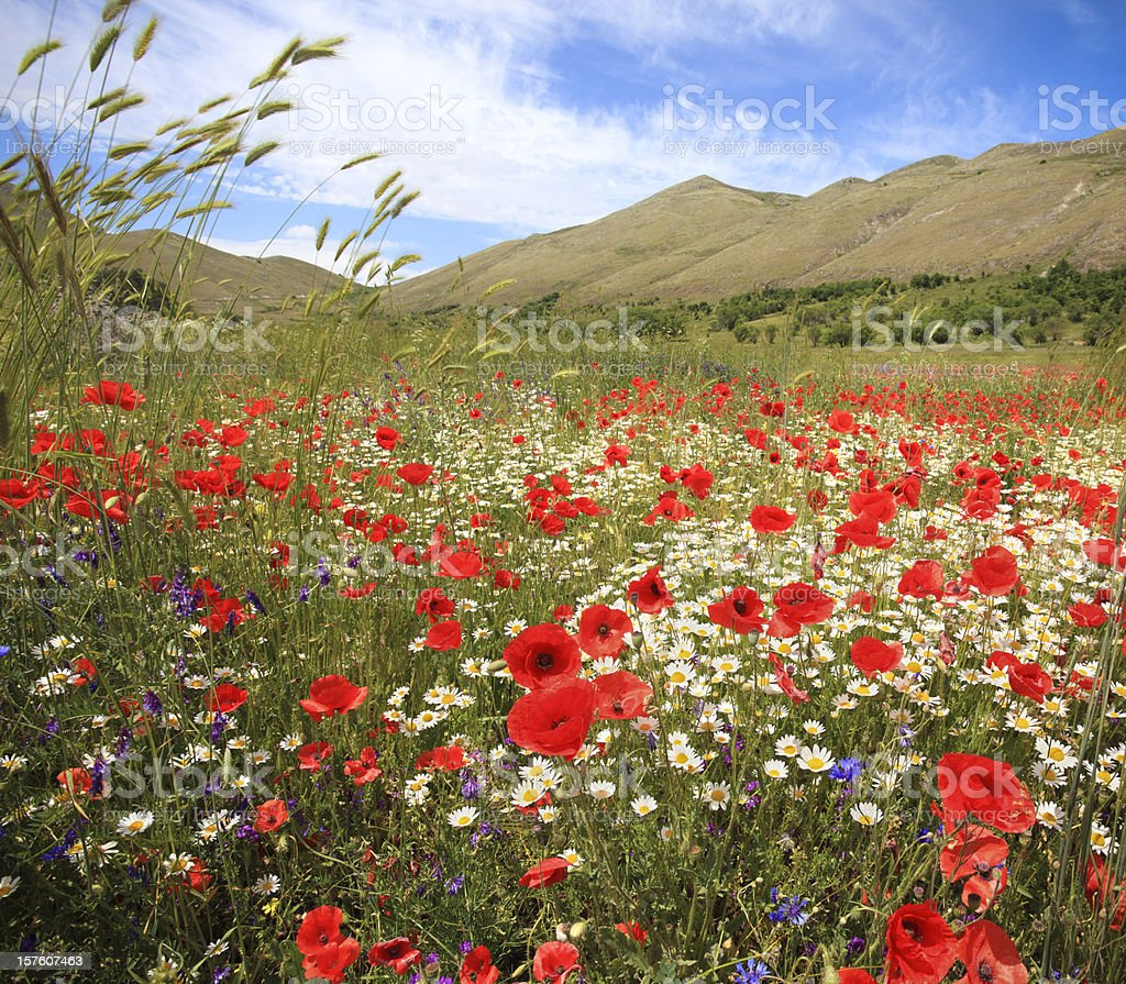Colorful meadow in the Abruzzo mountains, Italy royalty-free stock photo