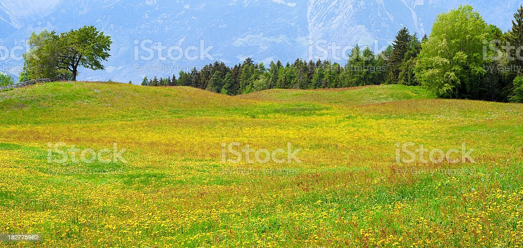 Colorful meadow royalty-free stock photo