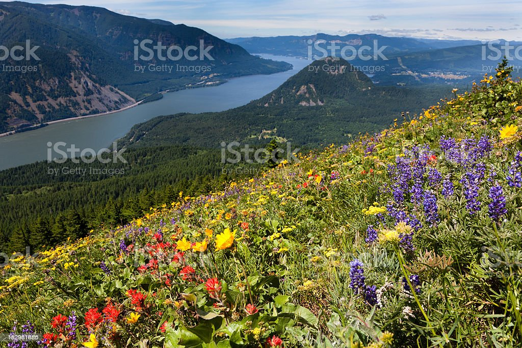 Colorful Meadows stock photo
