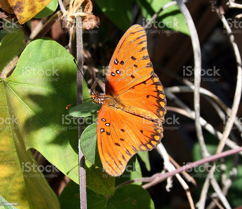 Colorful moth on a plan stock photo