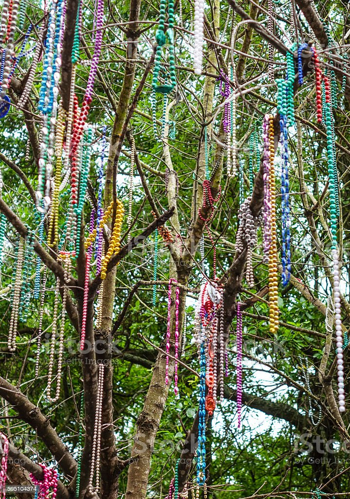 Colorful necklaces hanging in the trees of New Orleans Lizenzfreies stock-foto