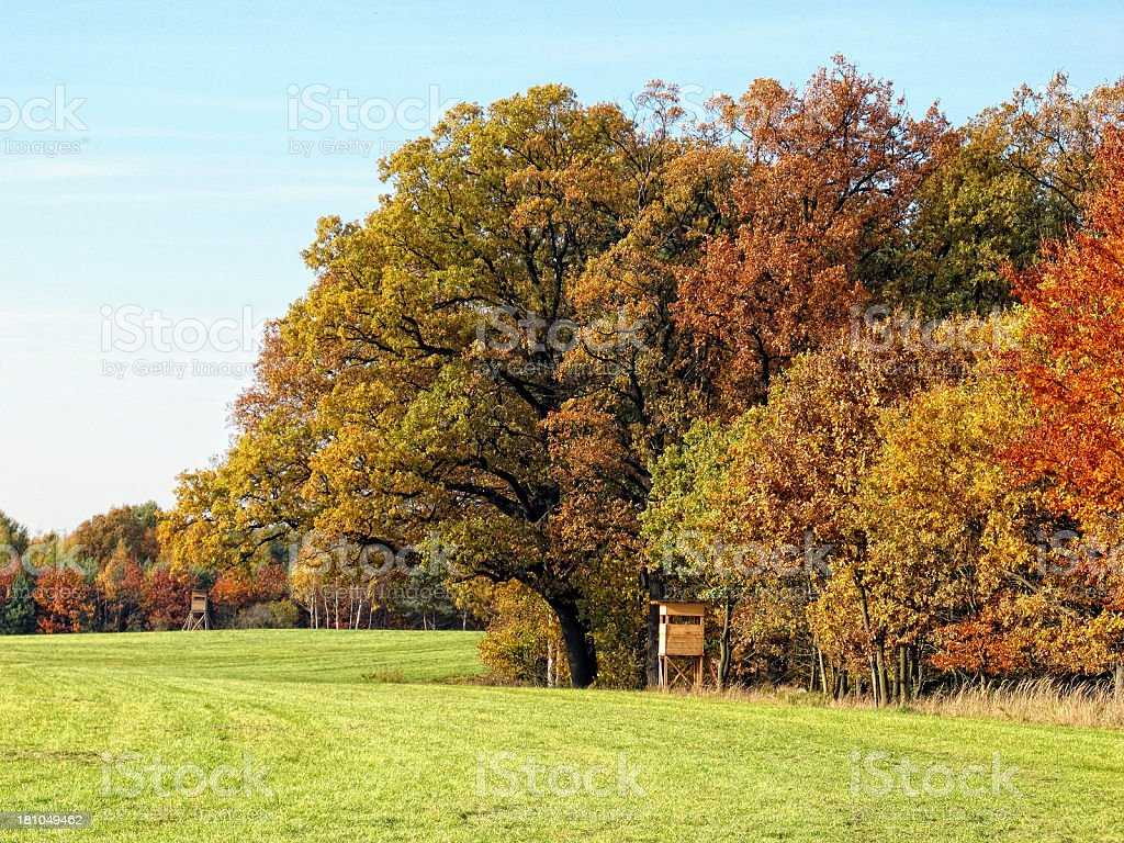 colorful oak tree in autumn time on a meadow field stock photo