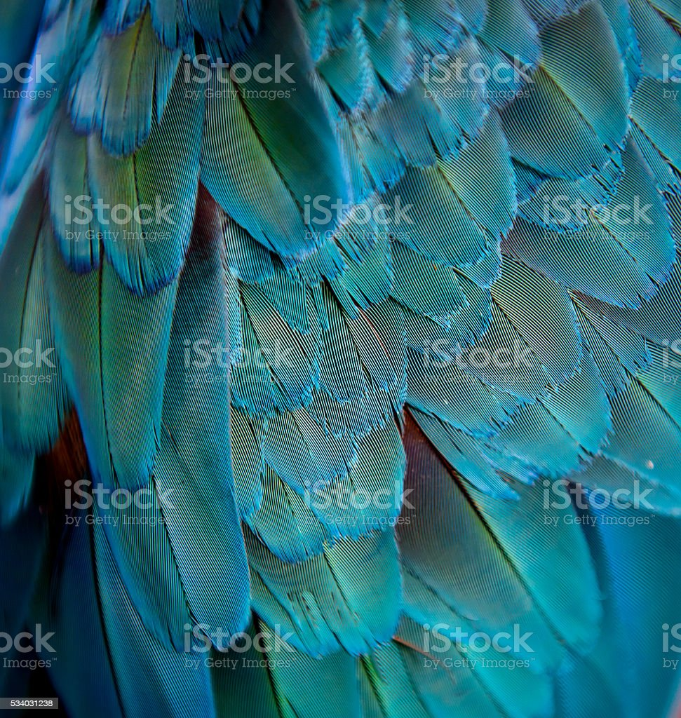 Colorful of Macaw feathers background. stock photo