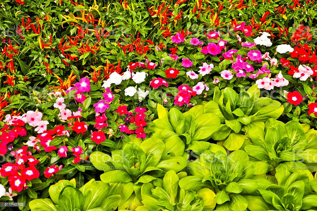 colorful of vegetable and flower garden,close up stock photo
