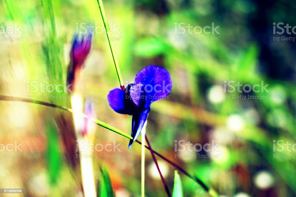 colorful of wildflowers stock photo