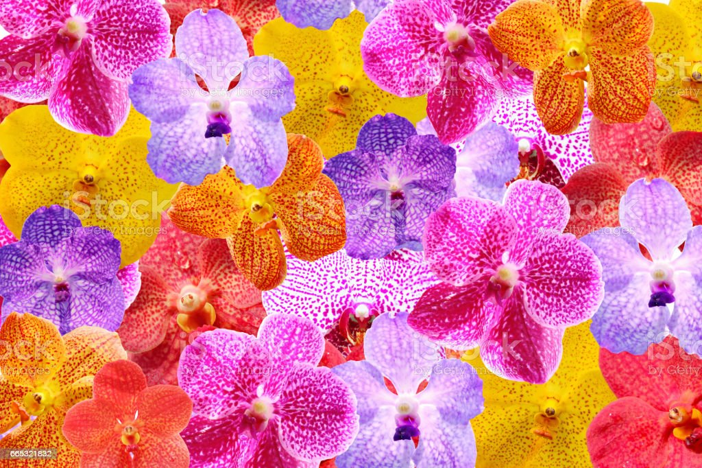 Colorful orchids flat lay for background stock photo