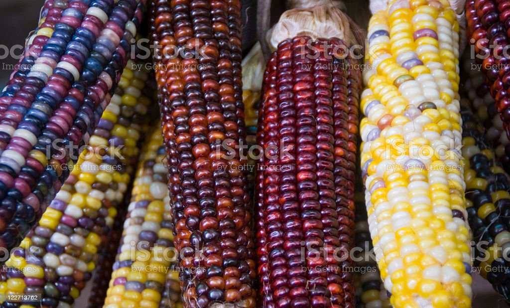 Colorful Ornamental Corn royalty-free stock photo