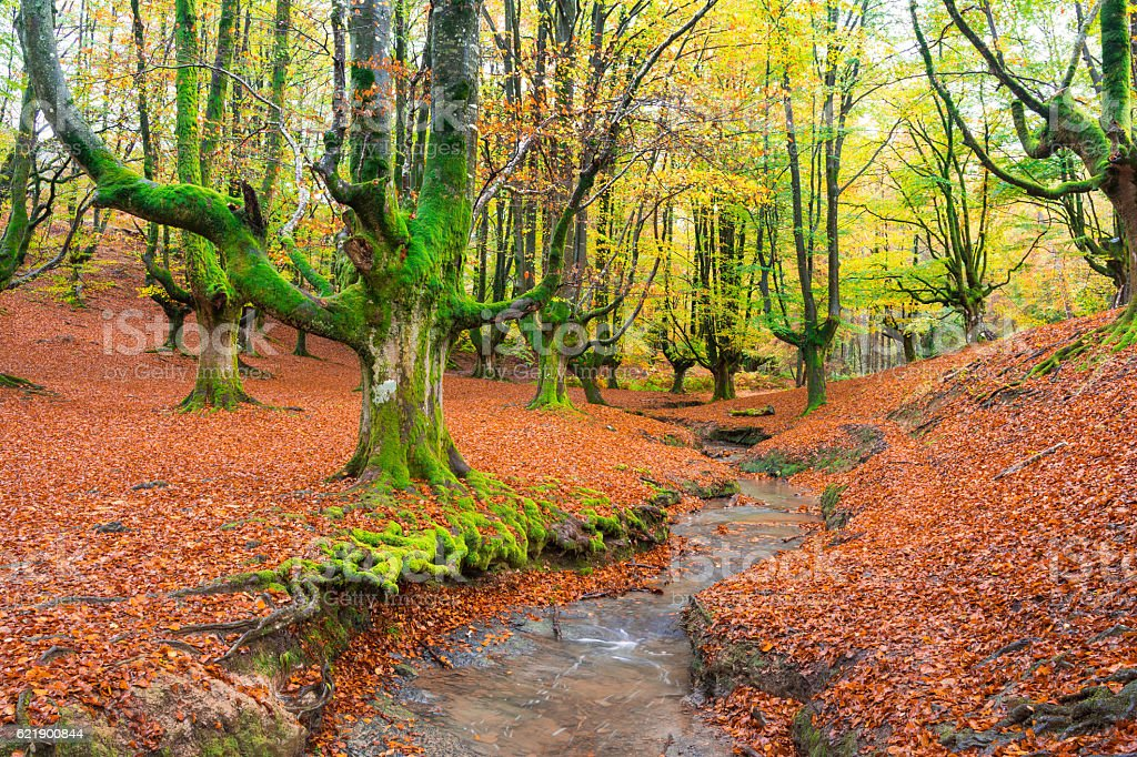 colorful otzarreta forest at gorbea natural park, biscay stock photo
