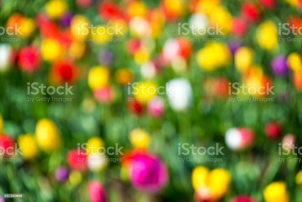 Colorful Out of Focus Background stock photo
