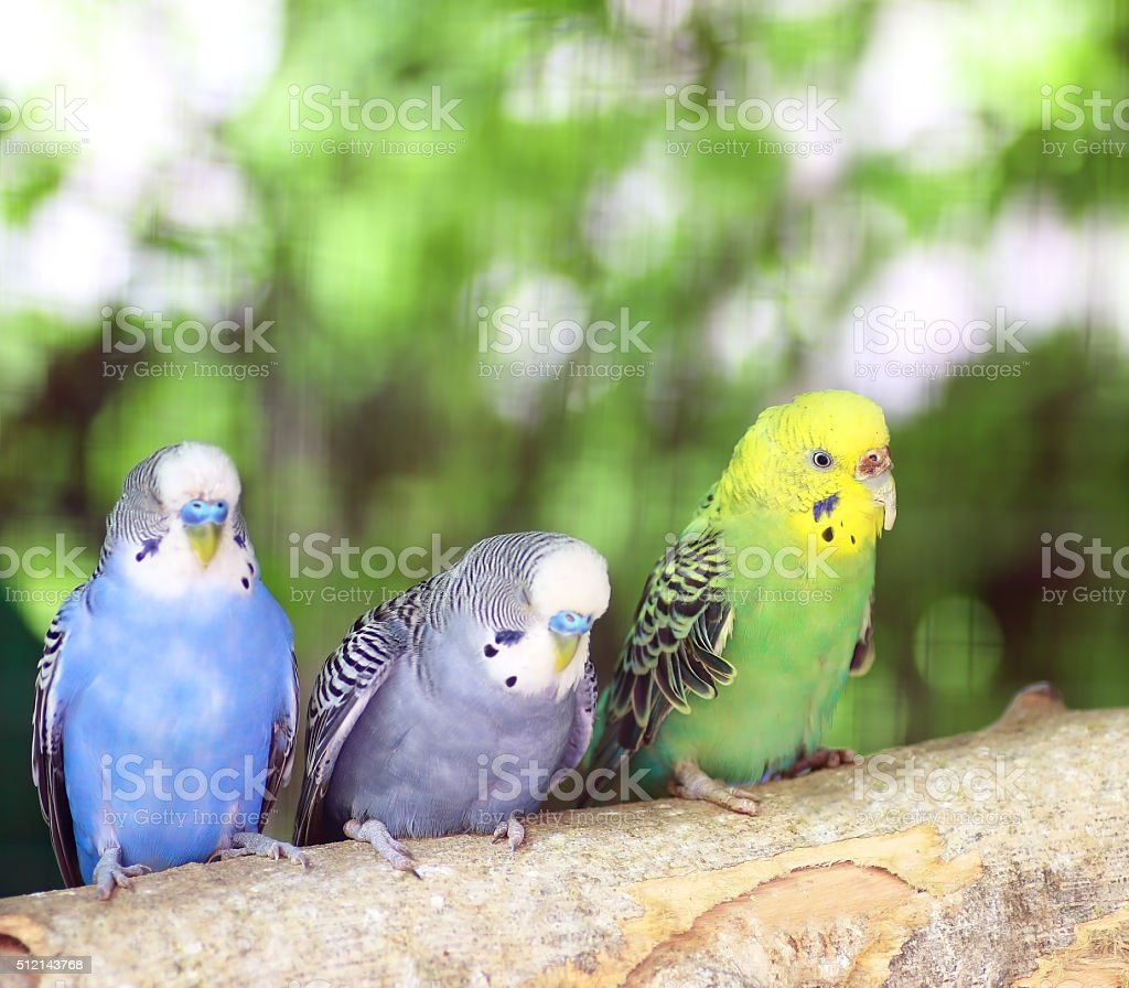 Colorful parakeet resting on tree branch stock photo