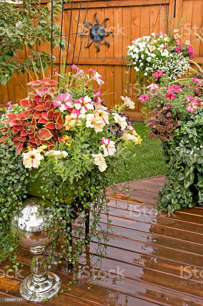 Colorful pots of flowers in backyard stock photo